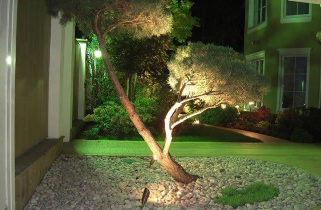 подсветка дерева: ландшафтный дизайн